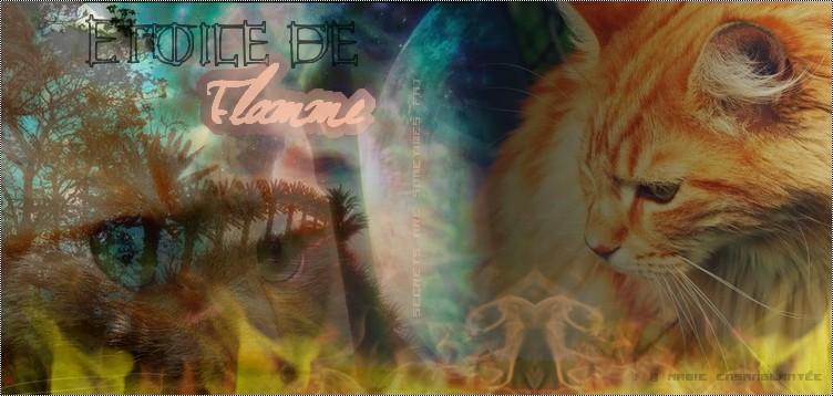 Petit Sphinx..Le chaton du Desert Signat10
