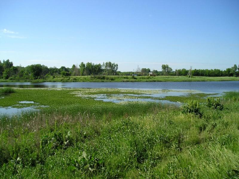 Озеро и Лес Nature14