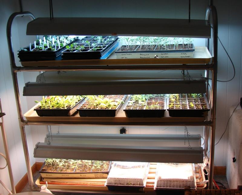 growing lights? Dsc04313