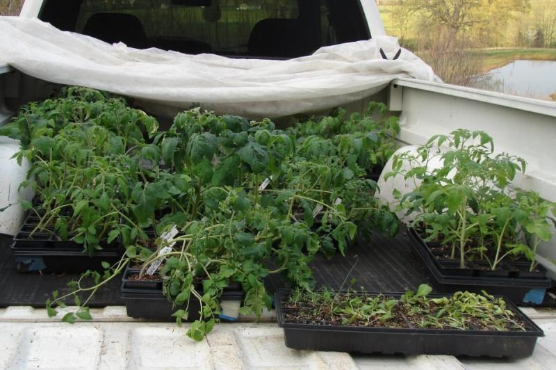 Tomato Tuesday 2012 Truck_10