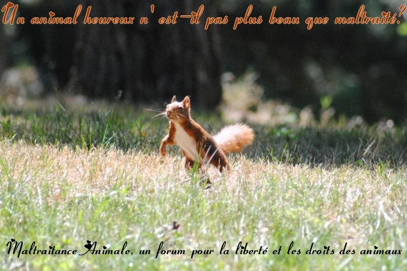 Stop Maltraitances Animales