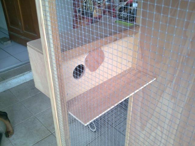 cage en construction Photo012