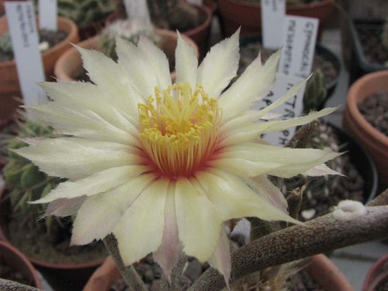 quelques floraisons  4310