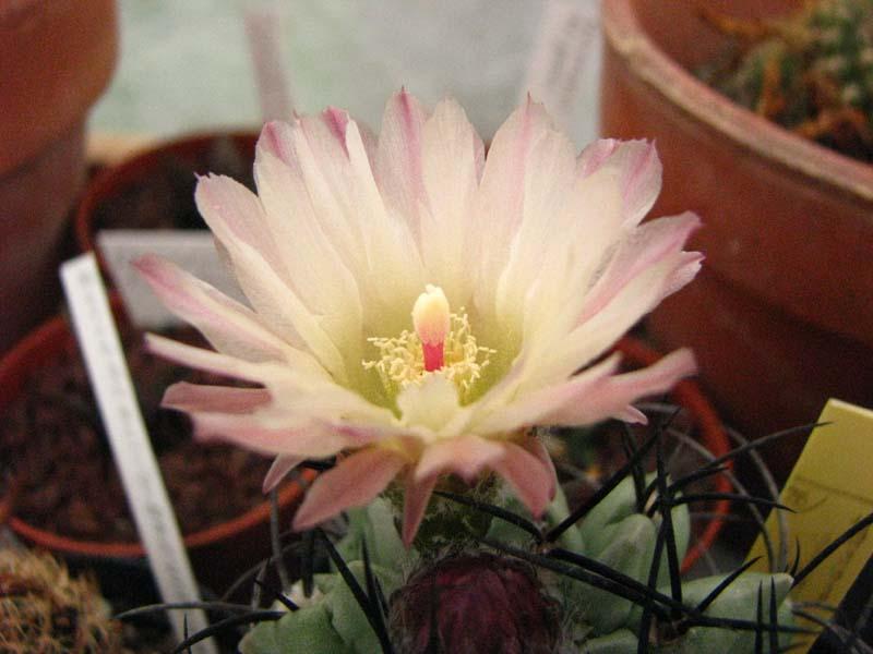 Quelques fleur du mois d aout 5010
