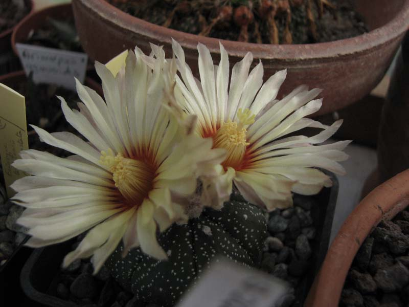 Quelques fleur du mois d aout 5110