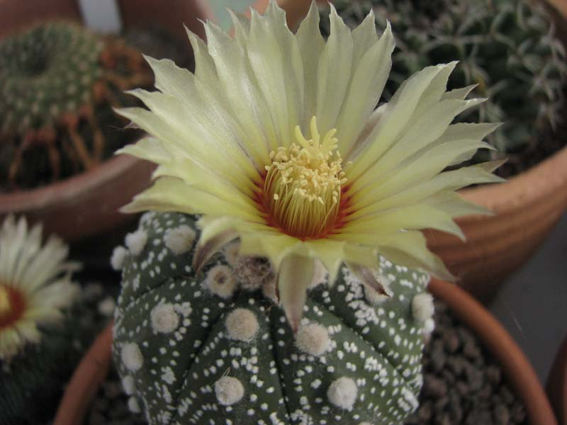Quelques fleur du mois d aout 5210
