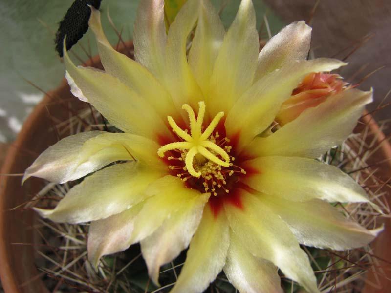 Quelques fleur du mois d aout 5410