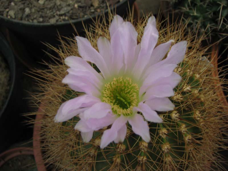 Quelques fleur du mois d aout 5510