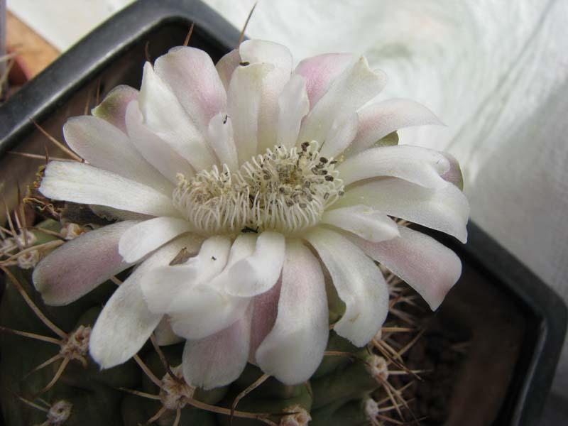Quelques fleur du mois d aout 5610