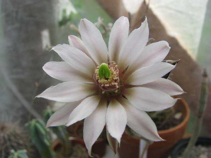 Quelques fleur du mois d aout 5710