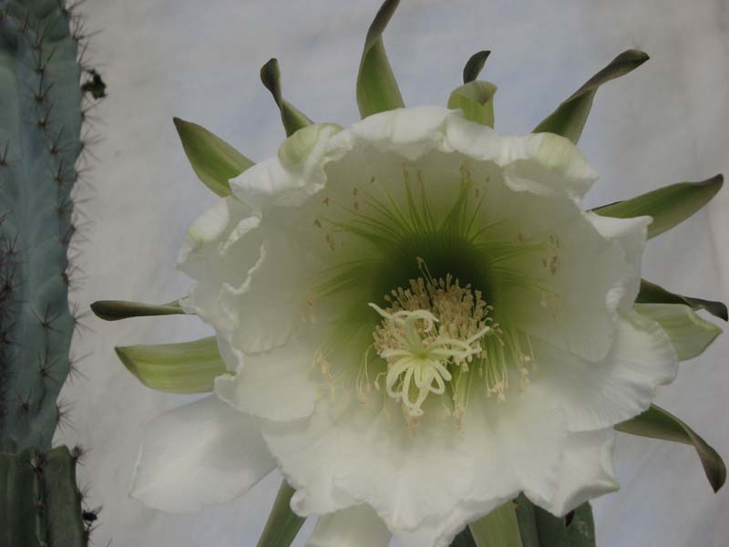 Quelques fleur du mois d aout 5810