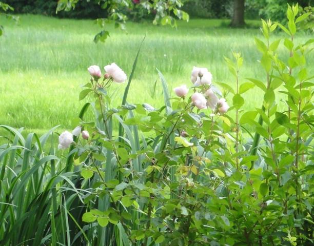 The generous gardener de Austin 2012_537