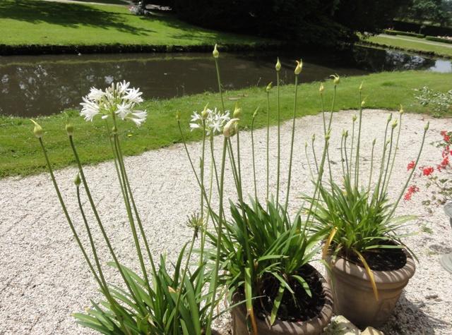 bac à fleurs 2012_605