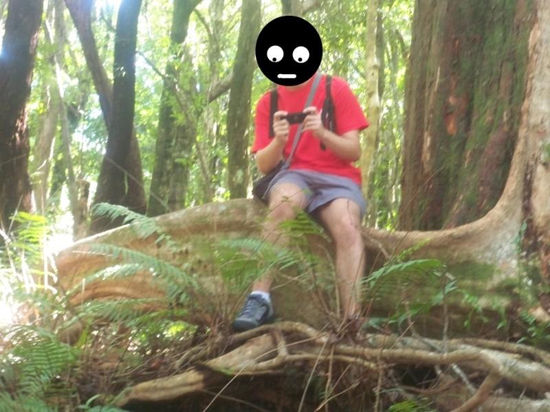 Reportage photo de la Réunion Foret10