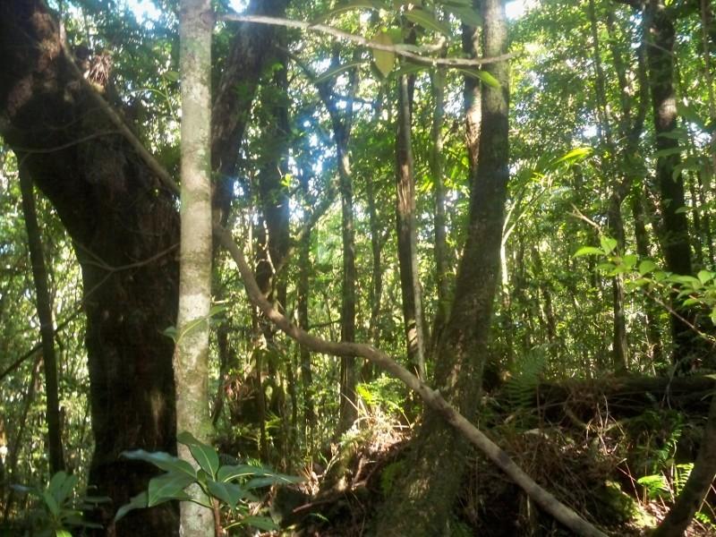 Reportage photo de la Réunion Foret110