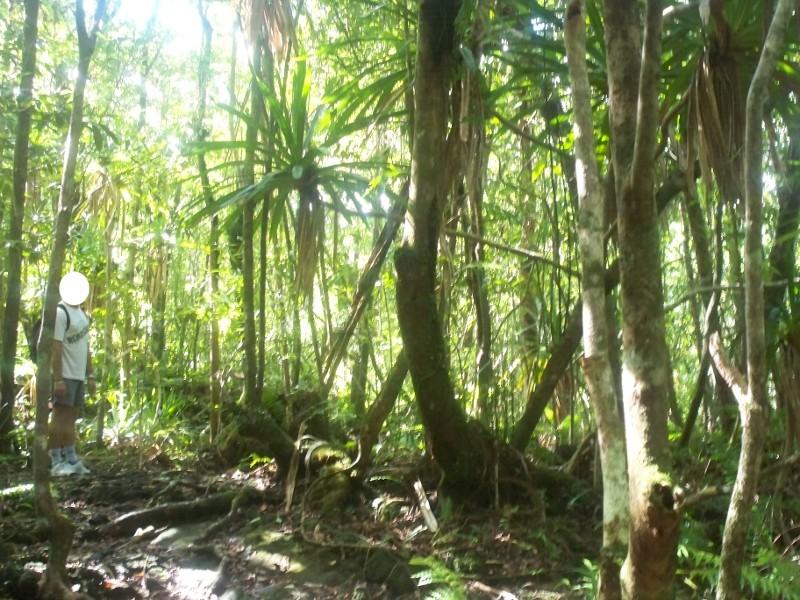Reportage photo de la Réunion Foret310