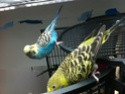 Zorgy et Blondie ont bien grandit ! Photoc12