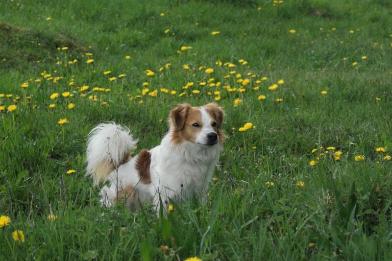 Vorstellung der Herzenshunde Dsc03011