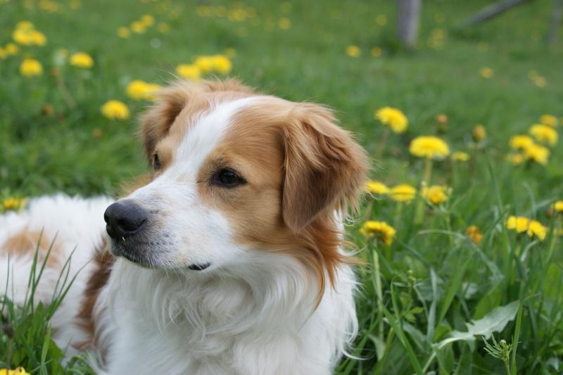 Vorstellung der Herzenshunde Dsc03111