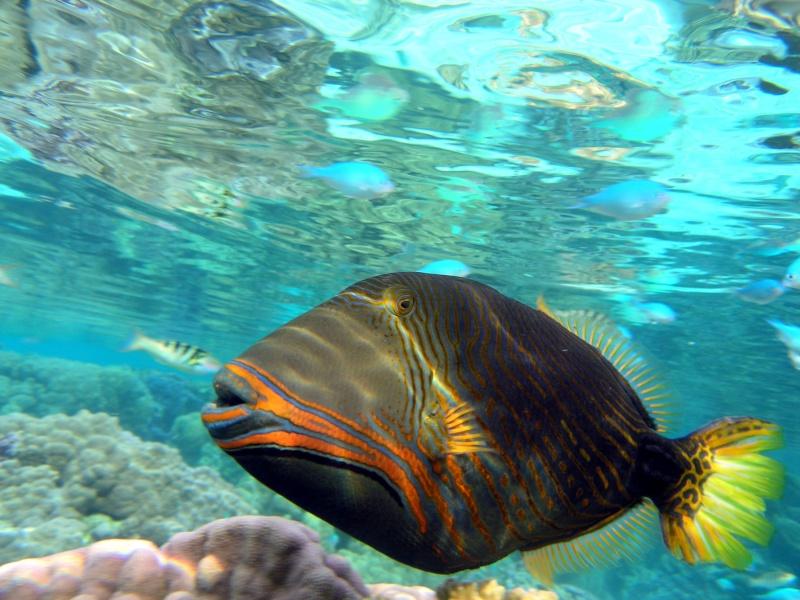 Plongée en Polynésie... Cd06f_11