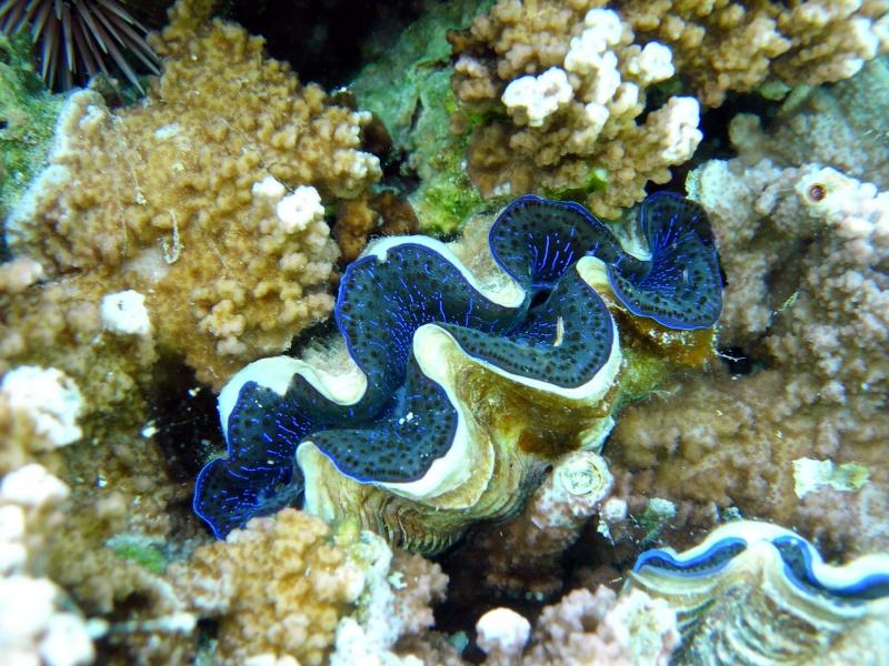 Plongée en Polynésie... Cd06f_14