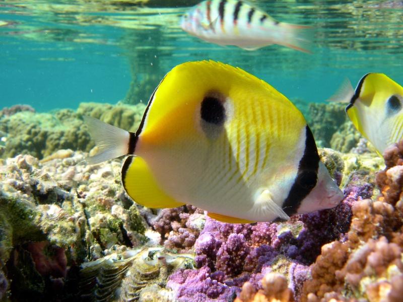 Plongée en Polynésie... Cd06f_15