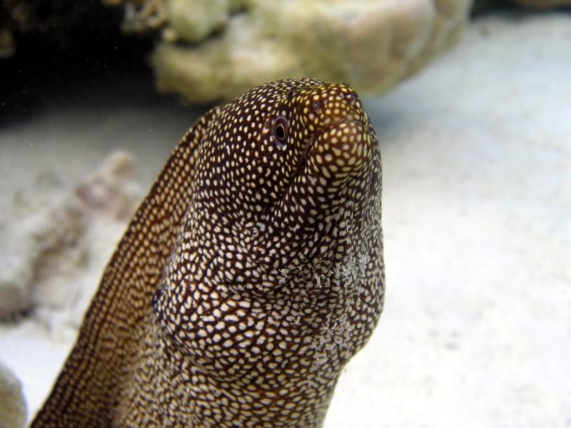 Plongée en Polynésie... Cd06f_16