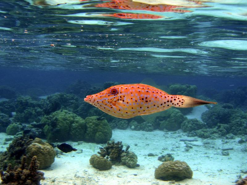 Plongée en Polynésie... Cd06f_17