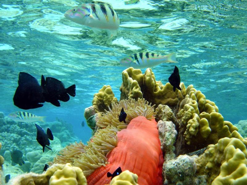 Plongée en Polynésie... Cd06f_18