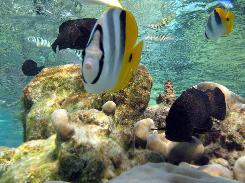 Plongée en Polynésie... Img_0310