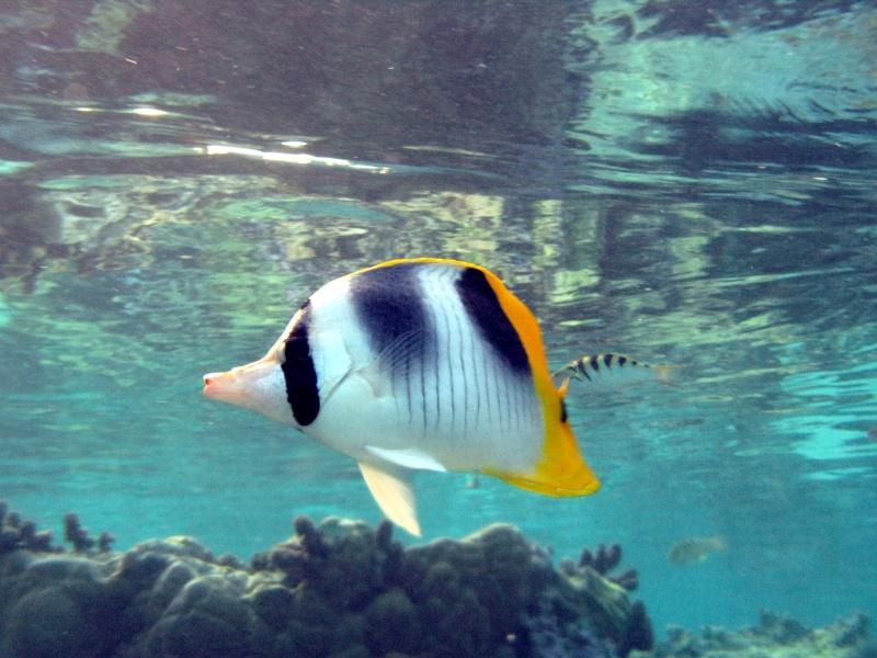 Plongée en Polynésie... Img_0311