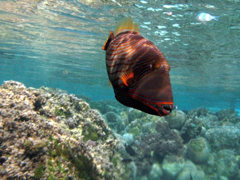Plongée en Polynésie... Img_0312