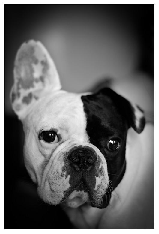 """Un portrait qui"""" a du chien"""" Img_7510"""