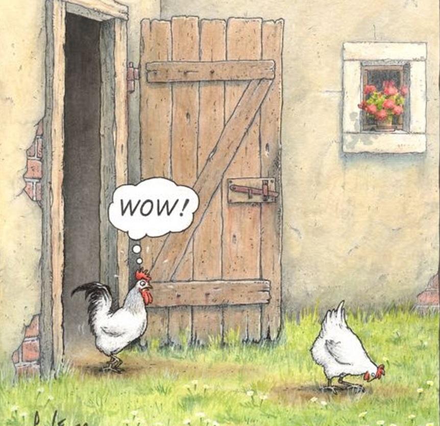 Humour du jour - Page 26 Coq10