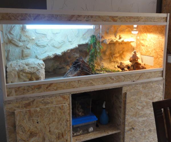Terrarium de mes pogo Dsc00447