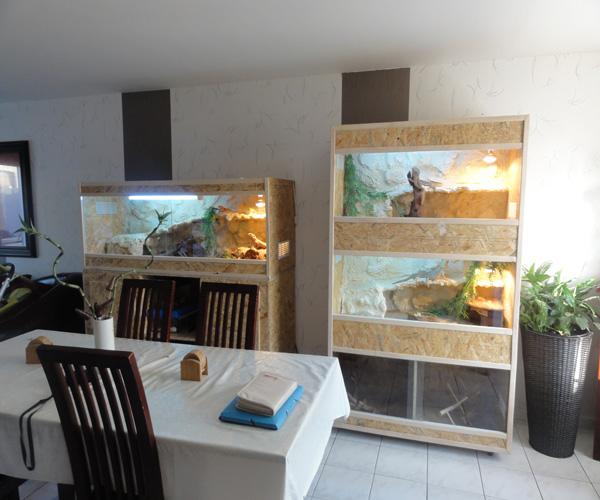 Terrarium de mes pogo Dsc00448