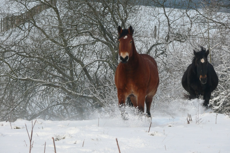 Concours Photos Décembre : Le Cheval et la Neige P1060811
