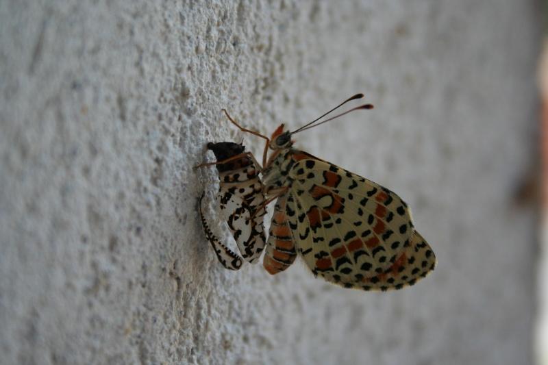 Très jeune papillon 013110