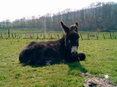 Mes ânes, de la bonne compagnie ! Bambi110