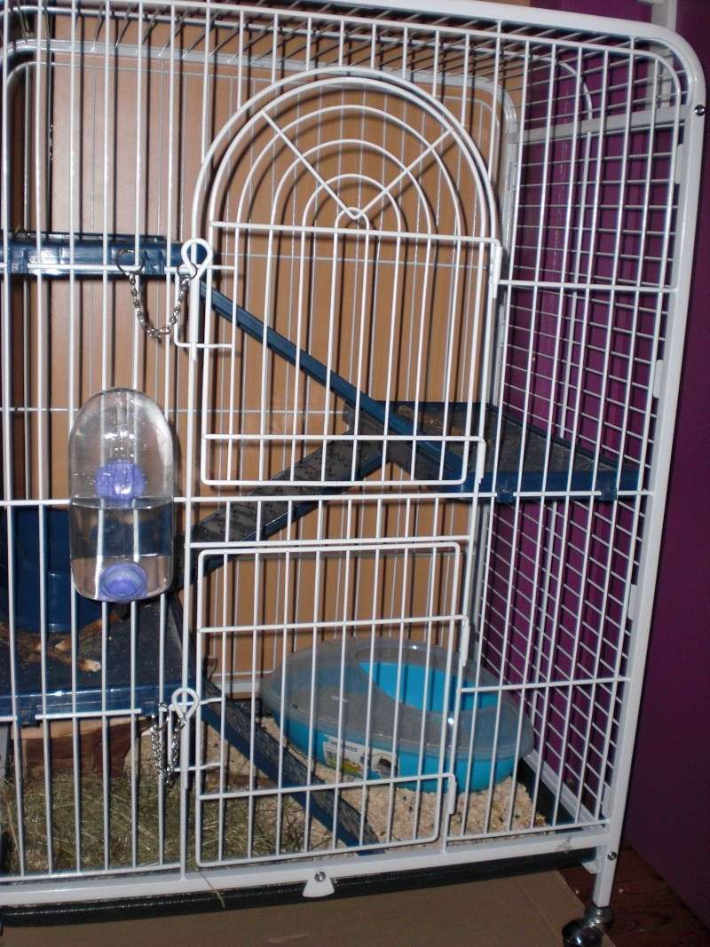 La cage de Schmeuphie Cimg1210