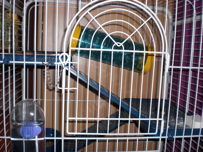 La cage de Schmeuphie Cimg1214