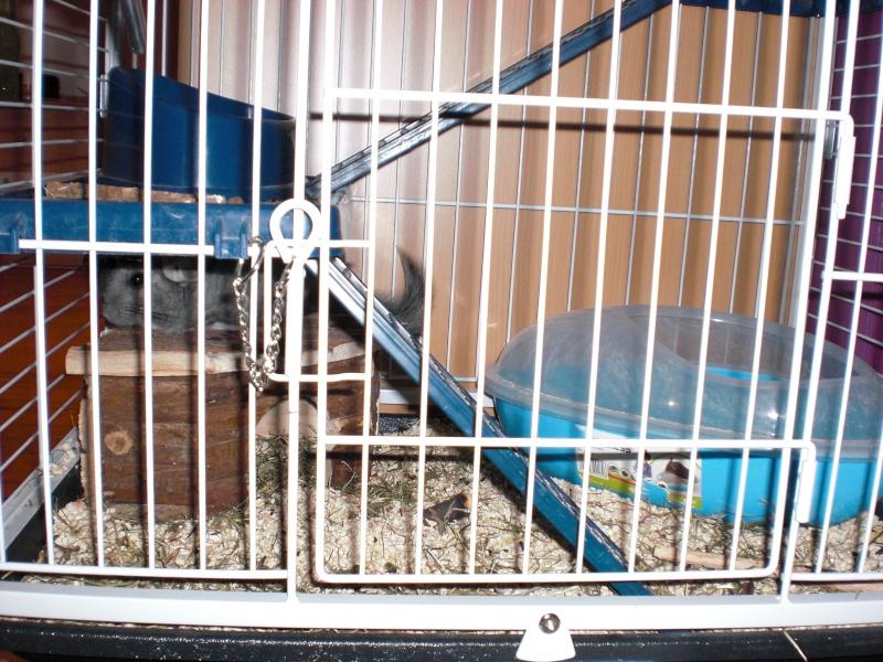 La cage de Schmeuphie Cimg1215