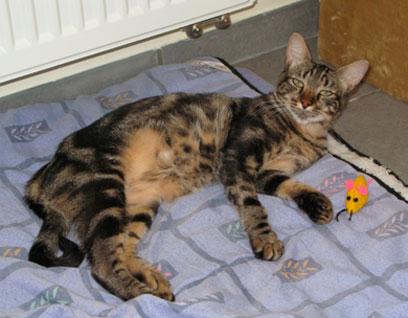 Cliquez pour nos chats sur Actuanimaux ! - Page 2 Harko10