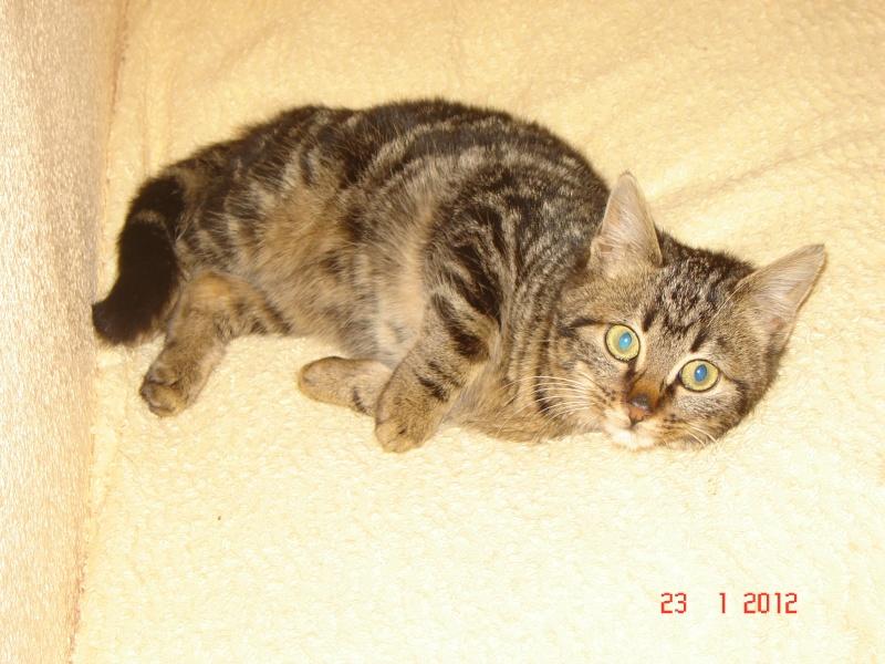 Hermine - née en novembre 2011 Hermin10