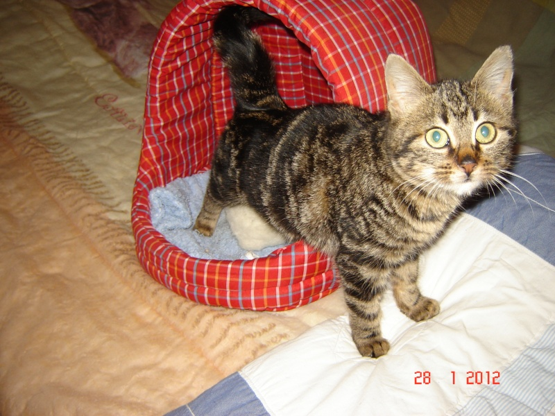 Hermine - née en novembre 2011 Hermin13