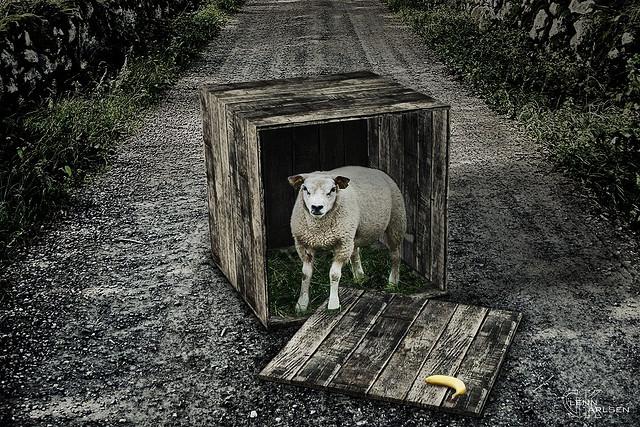 Mmmmm Who lives a box like this? 20944710