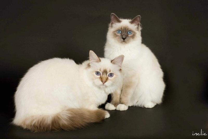 Gaï-shane et Genzo se sont rencontré aimé et,... des bébés! 42559711