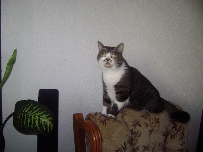 chat castré qui fait des marquages urinaire du jour au lendemain 31_aaa10