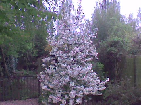 Mon jardin de fées (Chez Anne-Cécile) au fils du temps... 15110