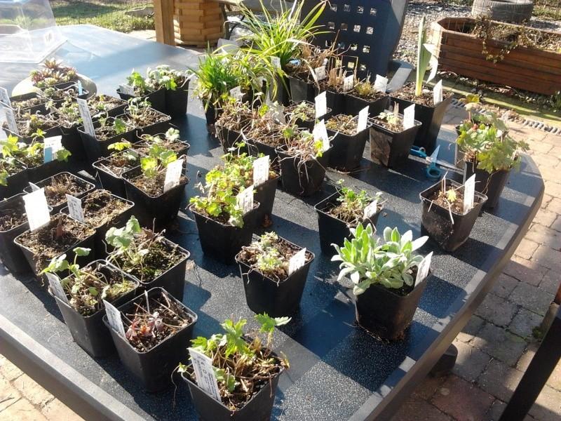 Mon jardin de fées (Chez Anne-Cécile) au fils du temps... 2012-023